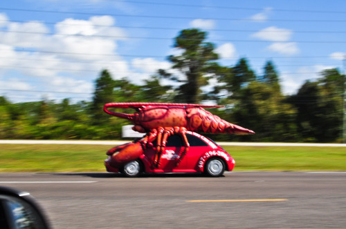 Ah, we're riding with him…. Lobstermobile on the run!