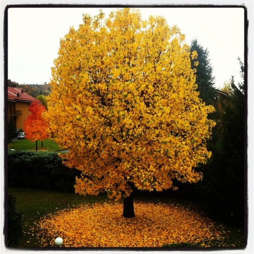 Autumn (Taken with instagram)