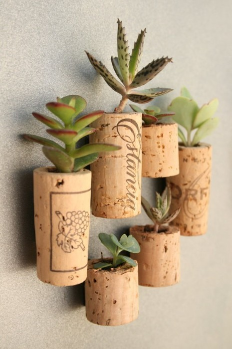 threadpaperscissors:  DIY Succulent Corks Okay so I saw this pic on Pinterest and I'm doing this- Hollow out a cork and put a little succulent inside…but I am going to attach magnets on the back to put on the fridge!   So much succulent love.
