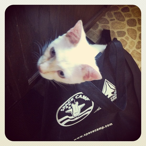 Eames is ready to go off to Space Camp! #nasa #space #instapets #catstagram (Taken with instagram)