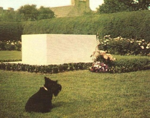 Fala overlooks his master's grave in the rose garden at Hyde Park in 1949. (Franklin D. Roosevelt - Ryan's Presidential Quest)
