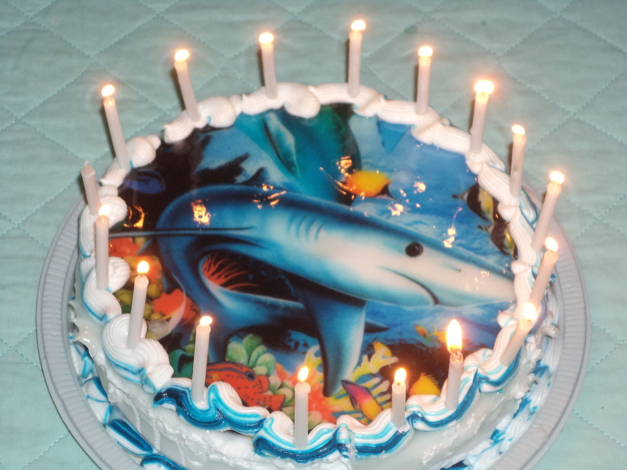 hotel room + shark cake. Could it be any better?