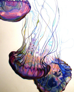 I'm deathly afraid of the ocean, but jelly fish are fascinatingly beautiful.