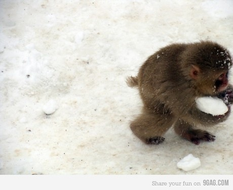 Just a baby monkey stealing snow!