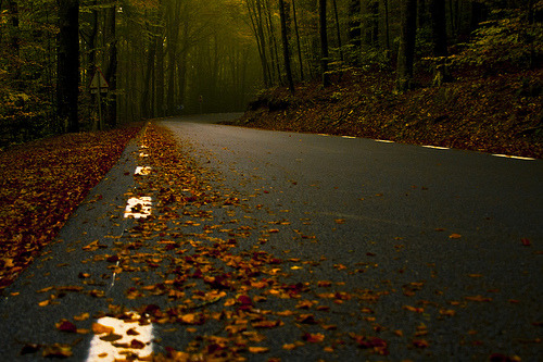 atypicalafrican:  (by futhark)  I want to drive down this road!