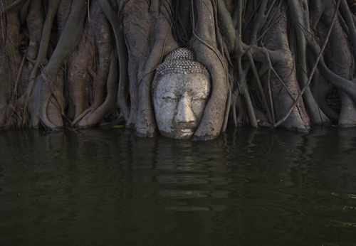 neiture:  A partially submerged Buddha overgrown by a Bodhi tree in the ruins of Wat Mahathat temple - Ayutthaya, Thailand | image by Adrees Latif
