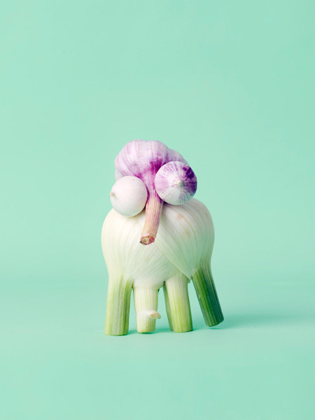 trubadeur:  Carl Kleiner  Plants can derp too, ya know.