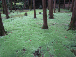 malformalady:  Path leading to Ganjin's grave at Tōshōdai-ji in Nara, Japan.
