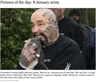 a member of animal rights advocacy group, rescue ink, removes one of more than 180 cats from a single family home in moriches, new york. rescue ink, a group of tattooed, harley riding men, rushed to rescue the cats when they heard of their living conditions.
