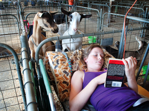 Reading with the Goats by jmurphpix on Flickr.