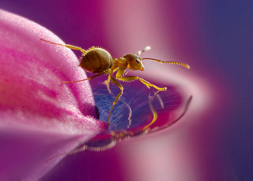 yellow meadow ant (via Smashing Magazine)