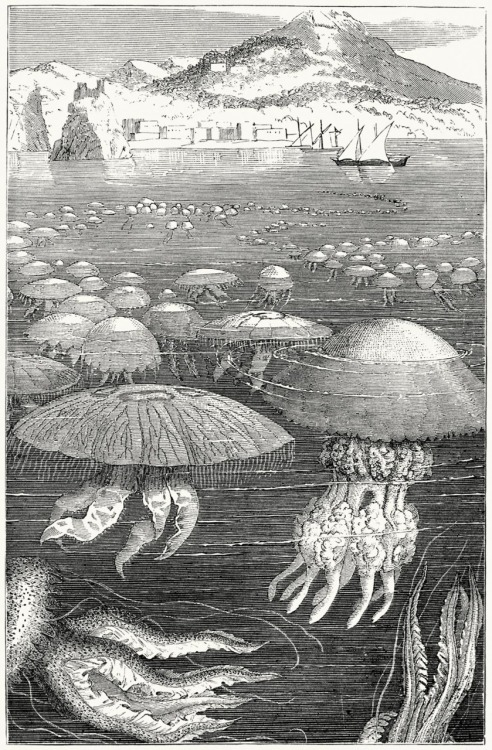 oldbookillustrations:  Fleet of medusae. From The ocean world, by  Louis Figuier, London, Paris, New York, 1872. (Source: archive.org)