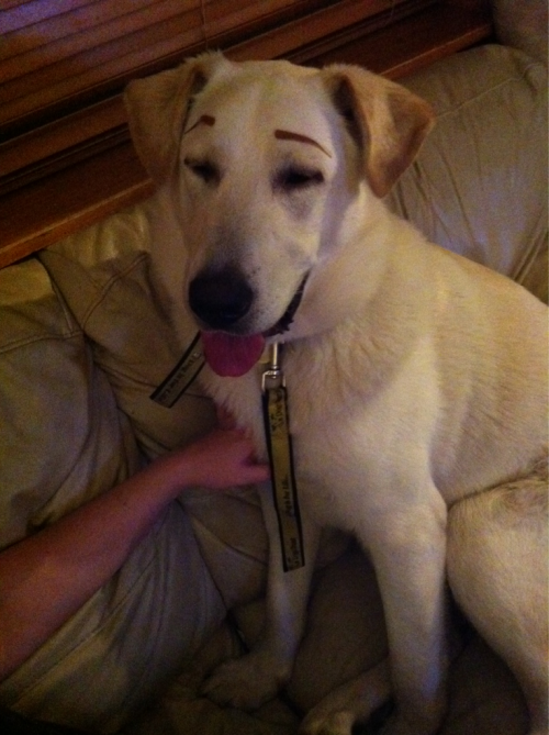 toothteeth:  I put eyebrows on my dog omfg