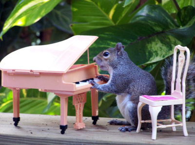 "elspethjane:  A grey squirrel appears to be playing a piano in this photo taken by retired postwoman Kathy Pruyn in her garden in Tampa, Florida, America. Kathy sets up various scenes by strategically placing peanuts and peanut butter among toys. She says: ""Sometimes getting the picture I want can take a few minutes and other times it can take almost all day."" (via Telegraph & Nancy Millichap)"