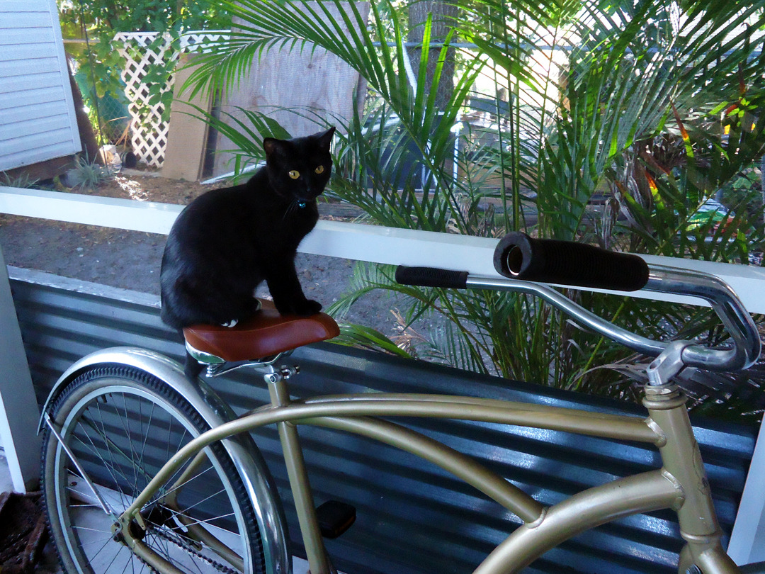 Get off that bike, Pixel. You can't even reach the pedals.