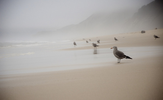 bird beach by stephsus on Flickr.
