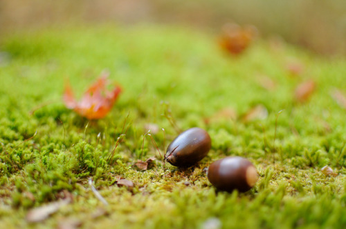 "どんぐりころころ acorn by ""KIUKO"" on Flickr."