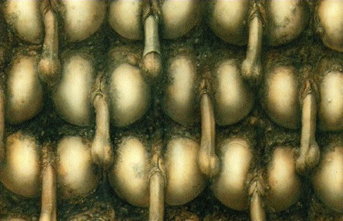 rudegurltori:  Landscape XX  1973 H.R. Giger This painting was reproduced on a poster included with DKs Frankenchrist LP (Alternative Tentacles 1985)