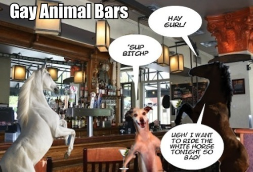 Gay Animal Bars