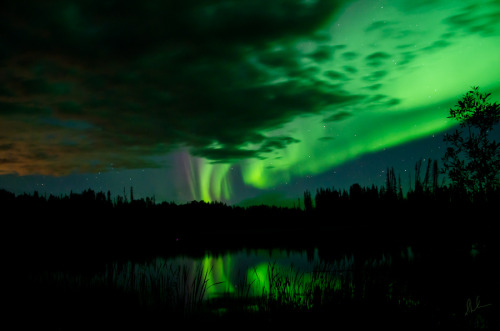cwnl:  Auroras At The Lake by Steve Milner