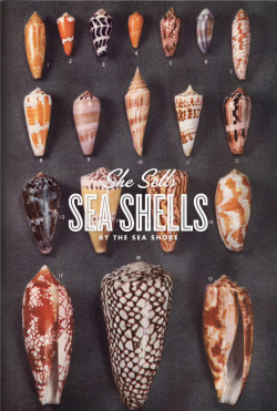 thingsorganizedneatly:  SHE SELLS SEA SHELLS BY THE SEA SHORE BY PATRICK DRAKE