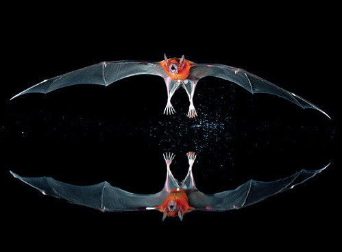 nevver:  le Bat  a reflection? Or two bats in space about to collide?!?!?!?!?