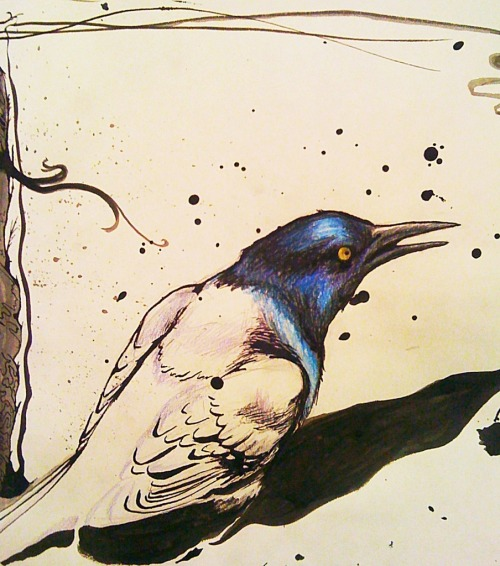 *Grackle Concept #2* drawing, mixed media by R. Sherinian