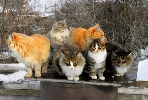 catasters:  Say cheese. Please… PLEASE!!!  These fluffay kitties look so warm! =^.^=