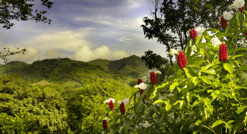 Costa Rica. Whether you are longing for an adrenaline filled adventure or want to chill at the beach all day, Costa Rica will deliver.  You can zip through the forest and meet a curious monkey or melt away in thermal springs… How perfect would that day be?!  What's stopping you from starting your next great adventure?  Check out a tour or two here.