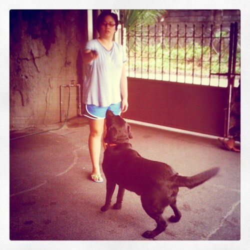 @gonefast #playtime with #Milo. #catch #dog #pet (Taken with instagram)