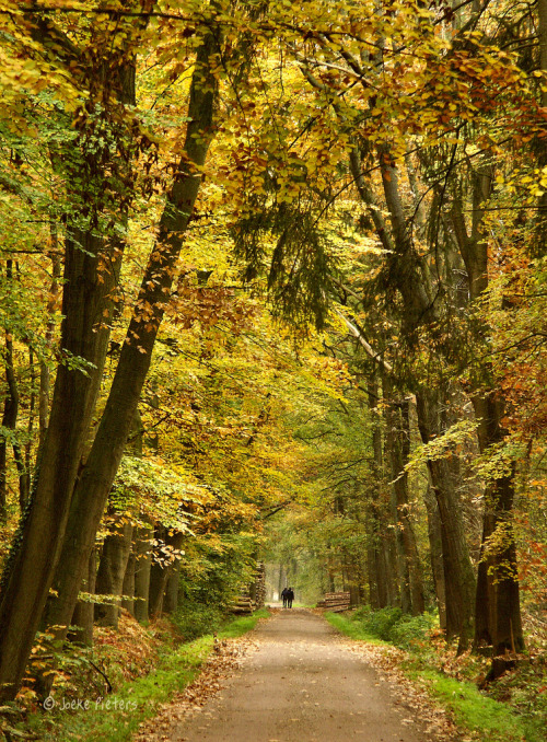 woodendreams:  (by joeke pieters)