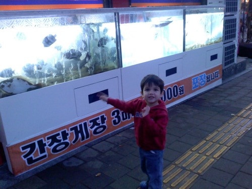 "Lucas, excited about some live fish in front of a restaurant.No need to visit an aquarium when you live in Korea.  Raising a preschooler in Korea with two foreign parents. Not a lot about this online. There are tons of blogs and online resources out there about living in Korea as a foreigner, obviously. There are quite a few on raising kids in Korea, too, but they seem to relate to families where at least one parent is Korean. Obviously there are families here in Korea where both parents are foreigners (we've spotted a couple), but they just don't seem to be writing on blogs or anything. Maybe because parenting a foreign child in Korea means you JUST DON'T HAVE TIME!!! So, until someone points us to some resources, here is our in-progress guide. Things You Should Know About Raising a Young Child in Korea (when neither parent is Korean) PART 1 - CHALLENGES Transportation Let's begin with the fact that, unless you've been granted immigrant or some very long-term status in Korea, getting a car is basically out of the question. This is the first vital way in which those one-Korean-parent families differ from ours. So first of all, your grocery runs and errands are done on foot with the subway and bus (or sometimes taxi) as your only means of transportation. For those who are used to this, it may not be as difficult. But for someone who had car access and no walkable stores both in the US and Mexico, it requires a whole paradigm shift. You can only purchase as much as you can carry while still having the ability to grab your preschooler out of the way of a speeding moto on the sidewalk, or out of his trajectory towards the boxes of live silkworms on the sidewalk near the street market. This requires more strategic thinking, shorter shopping runs, and a lot more hair-pulling. No, Lucas, we're not supposed to play with those. Now here, help me carry this bottle of red cooking wine.  Squeezing in here with a kid and large canvas bag full of groceries = madness. Supplies In the US, it seems the budget baby-supply business is booming, and you can always find bargains on everything from diapers to stroller systems, even brand-new. Here in Korea, like in Mexico, those deals don't seem to exist, at least not as readily as they do back home. In Mexico we had the mercadito, street market, where people often sold secondhand stuff for a little bit cheaper, and you could often find baby gear for better prices. Here, the street markets near our house only sell food, so we're left to find clothes and gear at the superstores like HomePlus and SaveZone, which do NOT have the greatest prices for these things. As I mentioned in a previous post, this was the biggest contributing factor to our decision to potty-train Lucas soon after we arrived. Even diaper prices are shocking when you're used to a $20 store-brand box from Target that can last an entire month. Korean Huggies: 60 diapers for nearly $30 US.AmazonMom members might pass out when they read this. Nightlife/Exploration Lots of foreign teachers get together at night in places around Seoul. My recruiter who matched me with this job hosted an event where teachers came from all around the surrounding province. We've hardly had a chance to take part in any of these get-togethers because when your child is having a meltdown in the apartment at 5:30pm, it seems like a suicide mission to attempt an event an hour away by subway that will likely last until 10pm. Carlos has gotten a chance to go out and have dinner/watch soccer matches with some of his teammates from his soccer team, but Lucas is just not ready for that, and Itaewon (a popular sector of the city for foreigners) is not reliably family-friendly after dark. Being a parent here means missing out on a lot of the events that other foreigners are enjoying.Itaewon Freedom doesn't mean the same thing when you have a preschooler in tow. The Curiosity! While this can also be a major plus (see the Benefits section below), it can be a challenge for North Americans who are unaccustomed to it. You see, at least here in the Seoul metro region, Koreans are used to seeing foreigners out and about. But what they're NOT used to seeing is small foreign children out and about. Our little non-Korean preschooler is a tiny celebrity the moment he hits the street. Women and men, young and old, seem to come out of nowhere and swoop him up, hug him, kiss him, and/or gush about him in rapid Korean. I have discovered that Korean ladies who have reached grandma age all seem to have a supply of candy in their purses, and as soon as they see Lucas, they start offering it to him. If I try to politely decline (like after this scenario has played out several times in the day already), they look at me like I am one horrible, mean person. So I've learned to just accept it, and I'm sure Lucas has no complaints. What can be troubling to a Westerner is the proximity. In the US at least, infants and small kids tend to be protected from strangers and germs, and most US moms would be slightly horrified to have strange ladies grabbing their babies in public. Just another day out with Lucas. Conveniently 사탕, satang or candy, was his first Korean word. The Public Scrutiny Meanwhile, any time we happen to experience a public parenting fail (example: Lucas decides to throw a toddler fit and lay down in the middle of a sidewalk because we're not stopping at Paris Baguette Cafe), there must be, BY LAW, an older Korean lady (A.K.A.아줌마, Ajumma) walking by to frown at us disapprovingly and perhaps even yell a few comments in Korean. Or he sits on the sidewalk, whining, because he doesn't want to walk anymore, and he doesn't appreciate our efforts to build walking endurance. Inevitably someone will come by and try to pick him up, as if maybe it just hadn't occurred to us that this is what he wants. In general, I feel like we're parenting in public and more subject to everyone else's analysis of our parenting skills, all the time. In the US, people may privately think critically about other people's parenting, and perhaps even talk about it behind their backs, but here they seem much more free to speak up about it to us (too bad we don't understand Korean yet) and even intervene. Although I don't generally care what other people think of my parenting practices, I do hate to be the obnoxious foreigner. Ajummas, perched and ready to point out the foreigners' parenting failures PART 2 - BENEFITS Other Kids Having a preschooler means regular trips to the playground, where we have a chance to meet the most interesting little kids. Right on our own apartment complex playground, we've met some awesome little preschool and elementary kids, several of whom can shame my middle-schoolers with their conversational English. We're usually found right away by a little girl who is maybe 8 and her brother who I'd say is 5. They like to play with Lucas. The other day we passed them on the street as them got dropped off by the van from their Taekwondo school. The little girl waved and yelled, ""Hi, Mimi!"" Her brother then waved to Lucas and yelled, ""Hi, Paco!"" So we're all struggling with names a little bit…. Then there's a Kindergartener whose English blew me away. I asked her if she used to live in another country. She gave me a list, including Texas, Malaysia, and Singapore. Then she went and got her mom who explained the whole fascinating backstory. Seongnam has a more affluent, ritzy side full of families who travel and have lived in other countries. This is NOT that side, so it's always unusual to meet people here with experience outside Korea. Another boy gets visibly frustrated with my inability to understand Korean, so he uses a stick in the sand to scratch out words in Korean, and then I use Google Translate to get an idea of what he's trying to communicate and perhaps find a response. The Sidewalks  This is one little aspect that I love. On most major sidewalks, and inside the transfer halls of most subway stations, these raised yellow grooves and dots are built right into the pavement. They're designed for the visually-impaired. The grooved lines continue for the full length of the sidewalk until an obstruction or intersection arrives, at which point you get a band of dots to signal caution. What non-parents probably don't realize is that this is an awesome way to teach a child to walk around a bit more independently. Although we hold Lucas' hand if it's crowded or there's anything dangerous, we can otherwise tell him to ""just go straight on the yellow lines"" and he happily walks until he comes to a dotted area, at which point he waits for us to proceed with him. Photo from http://winn1.blogspot.com/ People Approve of Harnesses! When we go somewhere especially crowded, like the night we went to an international soccer match, we like to put on the monkey harness, just for a bit more peace of mind that he can't suddenly dart into a crowd and get lost. The first time we used it, I was concerned that people around us might disapprove that we've basically got our child on a leash (once again, obnoxious foreigner issues). But the moment we hit the street, people were gushing over it, giggling about how cute, poking their friends while pointing and smiling. Want to make your cute foreign kid even more of a novelty? Strap a monkey-shaped harness on their back. Lucas calls him ""Jack"" The Curiosity! This can have its benefits, too. Where many foreigners seem to experience kind of a cold indifference from strangers on the street in Korea, we seem to get almost too much attention. Having a child with us means people are more comfortable to come up and start talking to us through their strained English conversation skills. They want to know where we're from, how old is Lucas, do we like Kimchi, what are we doing here. In addition, the freebies that come our way are astounding. Here's an example: Pass the LG telecom service store. Outside is a display case which for reasons I can't explain, is full of little toy cars and planes along with promotional material about LG service. When the guy behind the display case sees Lucas, he smiles, reaches in and gives him one of the toy garbage trucks, says, ""Do you like? Yes? Goodbye!"" Have a few encounters on the street with various passers-by smiling and exclaiming ""Baby is very cute-ee!"" from those who speak English,  or a barrage of other phrases in Korean, some of which we're beginning to recognize and understand. Perhaps another gift of candy. Enter the mega-supermarket. Some ladies are selling these crisped rice cakes and other treats at the entrance. Upon seeing Lucas, they swarm him and we walk away with a bagful of treats they gave him. Do our shopping as the fellow shoppers turn to look at us, stop, and smile to hear Lucas talking to us in English. Several say hello to us. Stop at Baskin Robbins to treat Lucas for a successful shopping trip. The man working there adores Lucas and tries to spark up conversation with us in English, even as other customers wait to be served. We end up leaving with a free gift of a Baskin Robbins Lock&Lock pint container. Or another time, it was an entire gallon tub (""To keep his toys!"" the man told us).   Head to Lotteria (like McDonald's) for a quick meal. The girls behind the counter gush over Lucas and hand him a kid's meal toy even though he's just sharing adult menu items with us. Get on the bus. It's crowded but right away, several ajummas offer their seats so that I can sit down with Lucas. This is the demographic most likely to fight to the death for those seats, but enter a mom with a kid, and suddenly everything changes. These are all events that I suspect most foreigners without kids don't get to experience. Having Lucas with us really opens up an interesting world here. Those are some observations of parenting in Korea that have formed over our first two months here. Anyone who has been there/done that, we'd appreciate your perspective!"