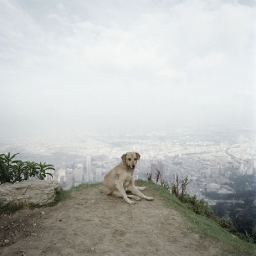 Alec Soth - Dog Days Bogotà  All images © courtesy of Alec Soth