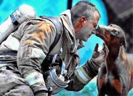 "davidup:  He had just saved her from a fire in her house, rescuing her by carrying her out of the house into her front yard, while he continued to fight the fire. She is pregnant. The firefighter was afraid of her at first, because he had never been around a Doberman before. When he finally got done putting the fire out, he sat down to catch his breath and rest. A photographer from the Charlotte, North …Carolina newspaper, ""The Observer,"" noticed this red Doberman in the distance looking at the fireman. He saw her walking straight toward the fireman and wondered what she was going to do. As he raised his camera, she came up to the tired man who had saved her life and the lives of her babies, and kissed him, just as the photographer snapped this photograph…."