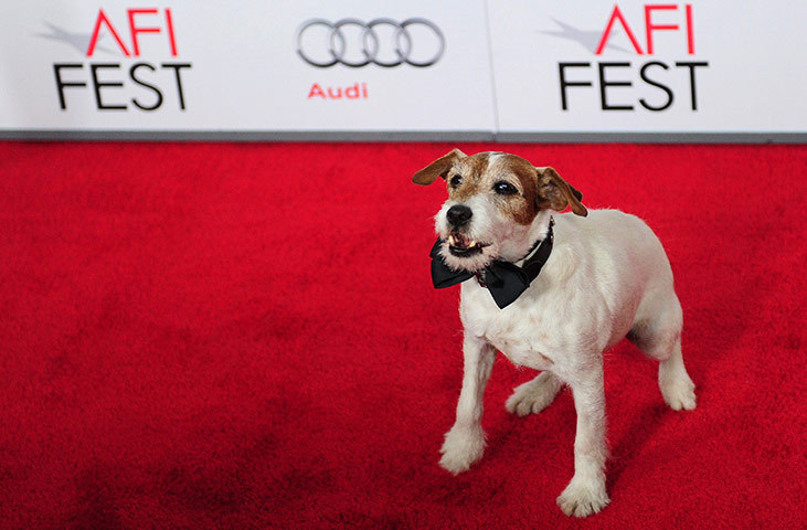 bbook:  All I'm saying is, this dog better get a Best Supporting Actor nomination or I give up.  I'm giving up the whole 'English bulldog on a skateboard' thing because of The Artist and I now want a Jack Russell Terrier; specifically a life-saving one who pulls the protagonist out of spiraling depression and/or causes Bérénice Bejo to show up at my door.  No, but really, go and see The Artist. It's the greatest movie.