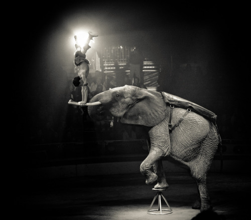 black-and-white:  circus | by yinetyang
