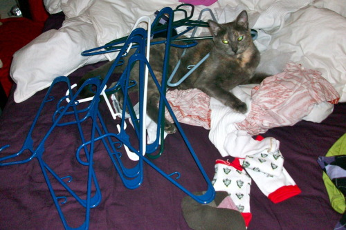 Stella's favorite thing besides terrorizing me = laying in piles of hangers.