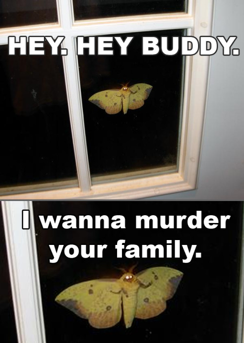 I had one of these MF on my window and it stayed there ALL DAY! I was hitting the window and all.. it stayed there til night time!