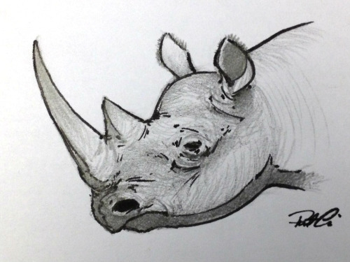 doodleofboredom:  Sad news, fellow nature lovers. The western black rhino has been declared extinct. We're so often oblivious or complacent to how fragile life can be, and all of a sudden, we lose another one. :( http://www.bbc.co.uk/news/science-environment-15663982