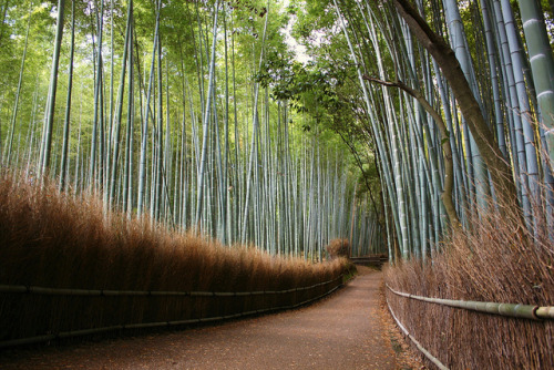traditionaljapan:  arashiyama bamboo forests by cyclingchick84