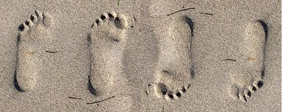 Embossed Footprints? -  When this photograph was made, the camera was pointing straight down at the ground. When you view it on the computer monitor, the orientation has changed. You look at pictures knowing that sunlight comes from above, so shadows should appear on the bottom of objects. By flipping this photo 180 degrees, the foot prints now look correct.
