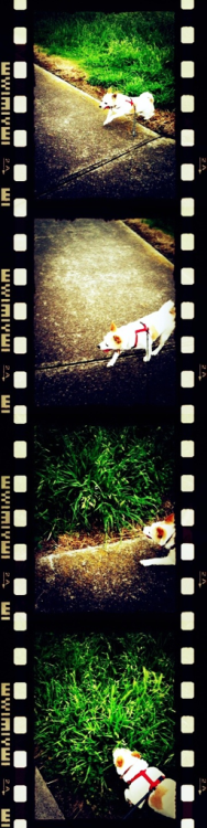 These photos are cooL :D Oh, of course, I love my doggy