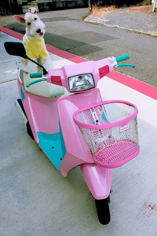 I need this scooter.