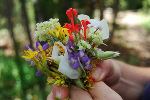 This is a bouquet of wildflowers I picked while hiking on a mountain in Idaho (which is gorgeous! who knew?) on our roadtrip. Anyway look at their colors! I've decided I want a wildflower bouquet at my wedding.