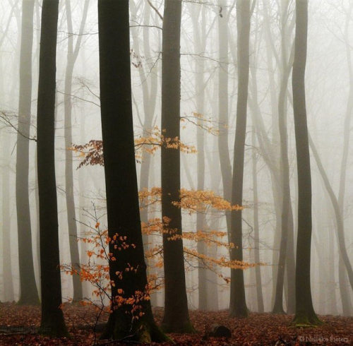 llbwwb:  Foggy Forest (via Smashing Picture)