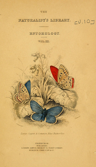 bibliatre:  The Naturalist's Library of Entomology, 1840 Via jomobimo