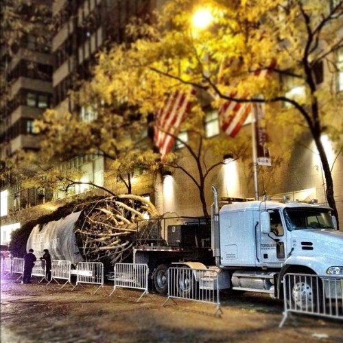 The Rockefeller Center Tree has arrived! #RockCenterXMAS http://instagr.am/p/ToiGq/