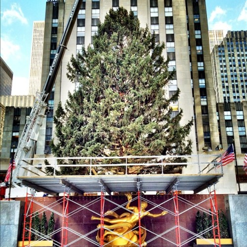 rockefellertree:  The Rockefeller Center Christmas Tree is in place. #rockcenterxmas  (Taken with instagram)  It's here! Check out a video of the arrival on the Today Show here.