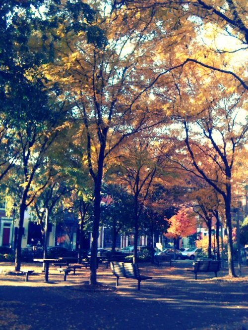 Shout out to fall foliage on Pine St. #Philly