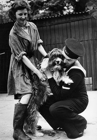A sailor greets a dog at Charlton kennels. After  the war, soldiers who fell in love with dogs while fighting in Europe  hated leaving them behind, so the Blue Cross set up quarantine kennels  to bring them back to the UK.  In the second world war, these were  reopened for the dogs of refugees fleeing Europe.